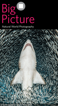2019 BigPicture Natural World Photography Competition