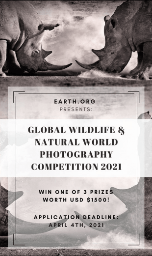 Earth.Org Global Wildlife & Natural World Photography Competition 2021