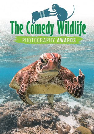 The Comedy Wildlife Photography Awards 2021