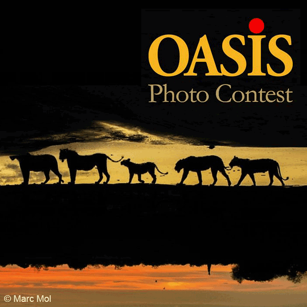 13th OASIS Photo Contest
