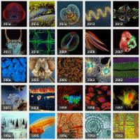 SMALL-WORLD-PHOTOMICROGRAPHY-COMPETITION
